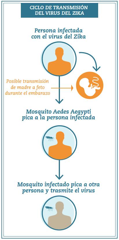 el-zika-ciclo-de-transmision